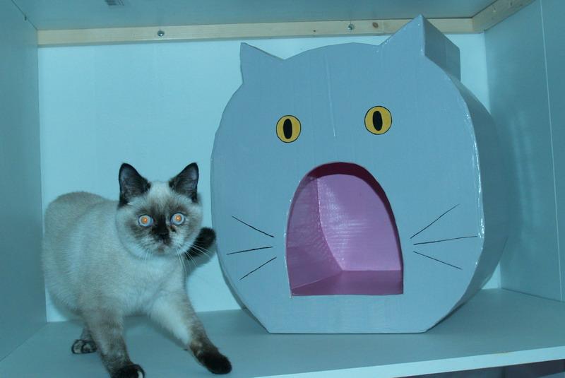 niche en carton pour chat amazing fabriquer une niche pour chat en carton tank mane son arma a. Black Bedroom Furniture Sets. Home Design Ideas